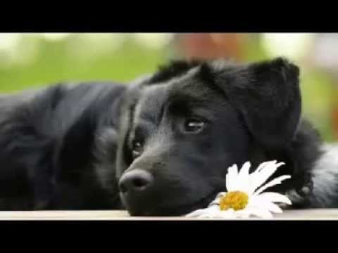 Is Kennel Cough Fatal