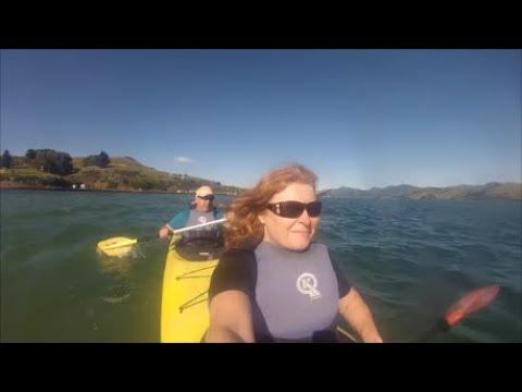 Things to see and do in and around Dunedin, New Zealand