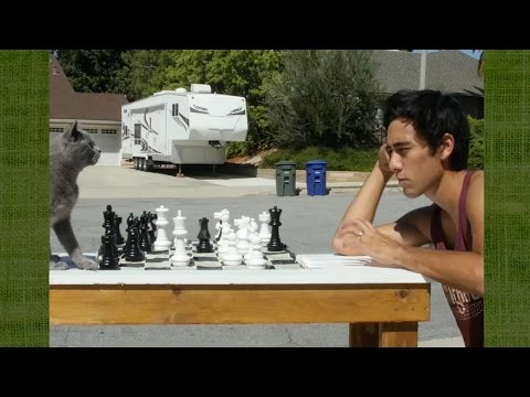 Teaching a cat to play chess