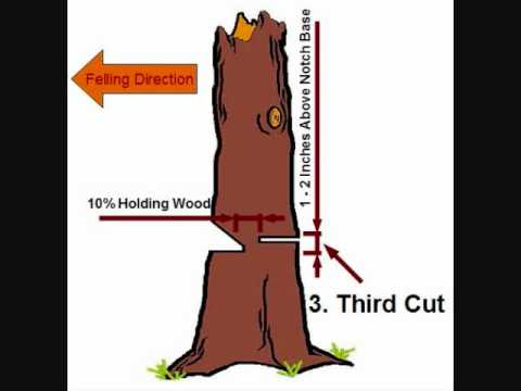 Tree Felling-Simple Notch and Back-Cut Technique.wmv