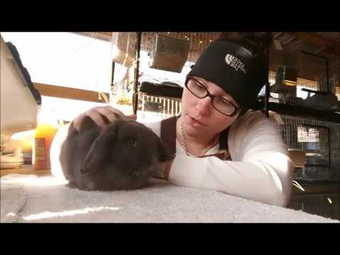 How to tell if your rabbit is pregnant - Palpating - Breeding Rabbits - Part 2