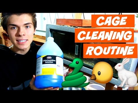 Pet Cage Cleaning Routine! (Snake, Bird, and Rabbit)