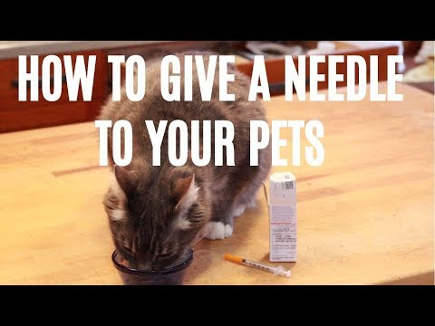How To Give A Needle To Your Dog or Cat
