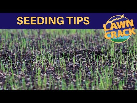 Spring Seeding Tips | Key Things to Know When Sowing Grass Seed