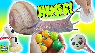 Download Cutting Open Huge Squishy Snail Toy! Snail Slime! Homemade Squeeze Toy Doctor Squish Video
