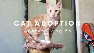 ADOPTING A CAT   Weekend Vlog 35