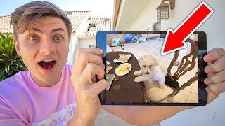 MY DOG DOES THIS WHEN I LEAVE?? (HIDDEN CAMERA)