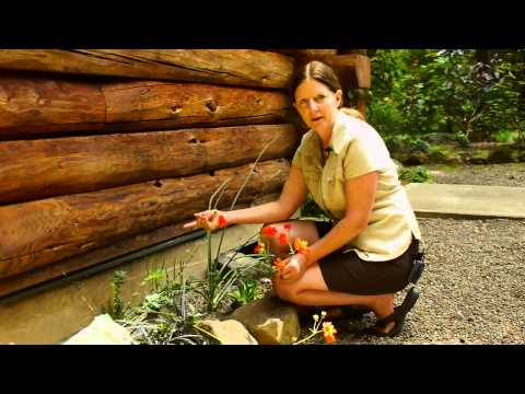 How to Plant Low Maintenance Flowers