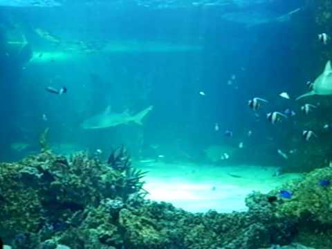 Great Barrier Reef - Sydney Australia Aquarium