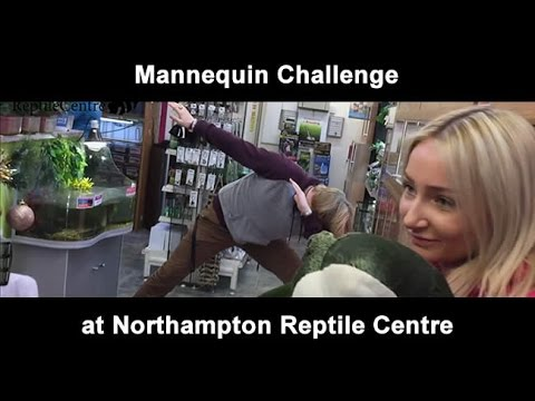 Mannequin Challenge at Northampton Reptile Centre