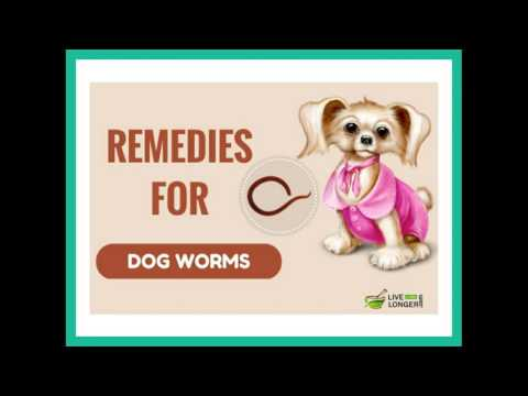 Remedies for worms in dogs