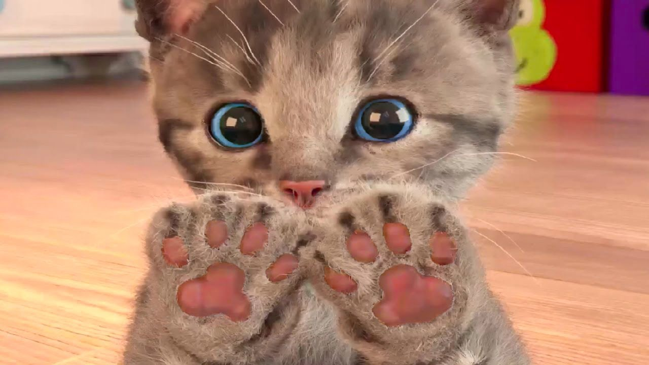 Kočičí cesta - malé roztomilé hravé koťátko a jeho cesta celý příběh