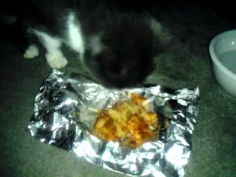 Kitty eats homemade beefaroni