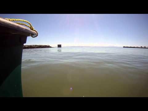 Canoeing by tsawwassen ferry terminal