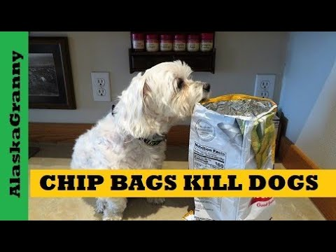 Chip Bags Kill Dogs