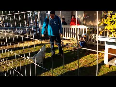 Fences For Fido - Sparky Unchained in Woodburn, OR