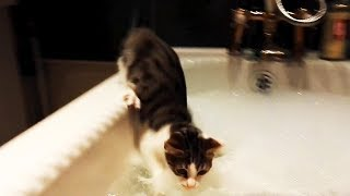 Funny Cats Afraid of Water 😹 (FULL) [Funny Pets]