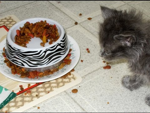 Bug Proof Pet Food Bowl DIY