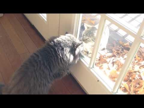 Indoor / outdoor cat