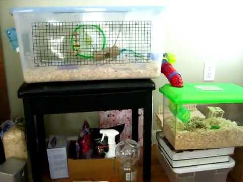 Chinese hamster bin cage tour!