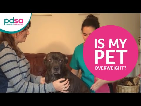 Is My Pet Overweight?