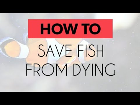 How to save a fish from dying