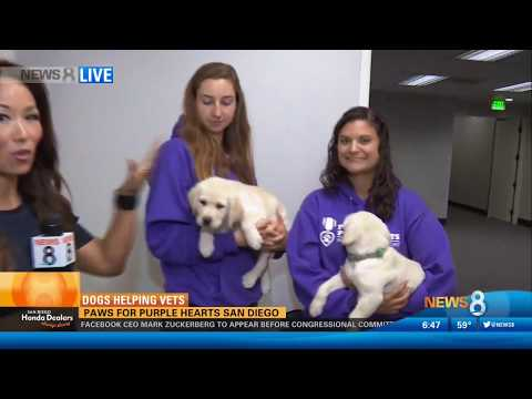 CBS 8 Features Paws for Purple Hearts