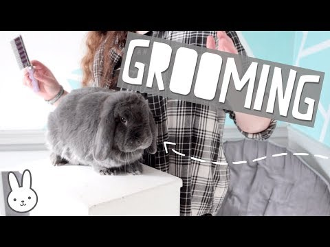Grooming & Clipping the Bunnies Nails