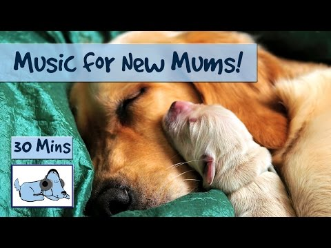 Music for New Dog Moms or Pregnant Dogs!