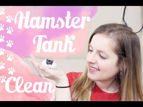 Hamster Tank Cleaning : Moo's 40 gallon Breeder Tank