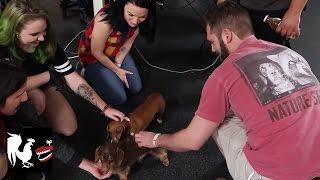 Dog Family Reunion