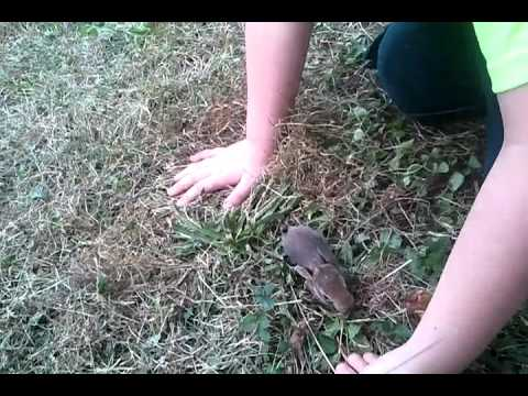 my son Willy, with a lost baby bunny at our home in Gettysburg PA.