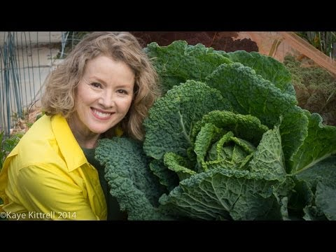 Growing Savoy Cabbage Part 2   Late Bloomer   Episode 6
