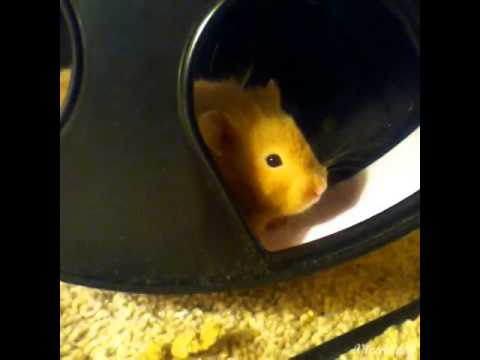 How to keep your hamster warm during winter