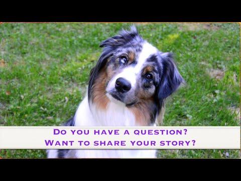 Want to send us mail? | ServiceDog Vlog