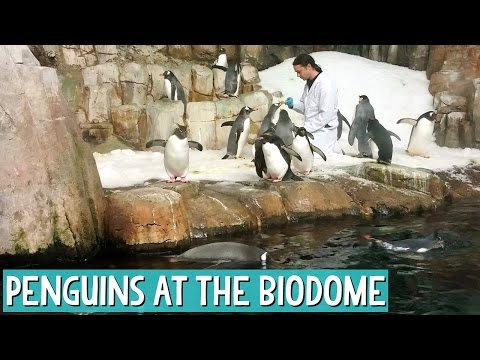 The Montreal Biodome - Penguins, Monkeys and Beavers Oh My!