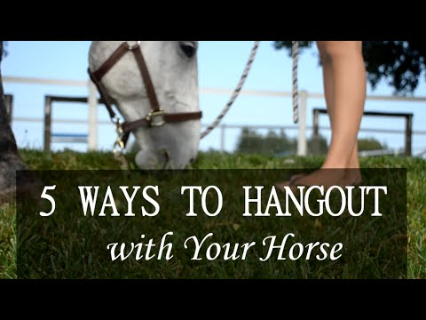 Hanging Out With Your Horse 101
