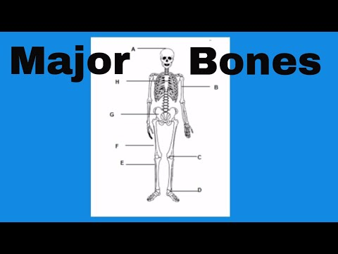 Learn the bones of the human body