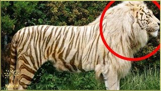Download TOP 8 ANIMALE HIBRIDE INCREDIBILE!