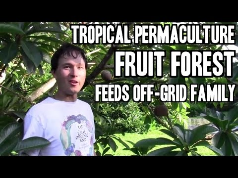 Tropical Permaculture Fruit Forest Feeds Off Grid Family