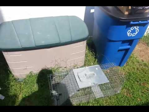 How to Catch Squirrels in Attic, Gutters and Deck Legally South Brunswick NJ 732-284-3807