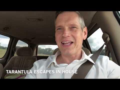 Tarantula escapes into our house