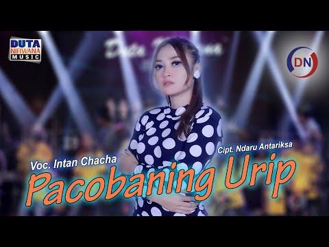Download Lagu Intan Chacha Pacobaning Urip Mp3