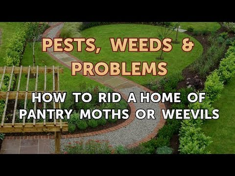 How to Rid a Home of Pantry Moths or Weevils