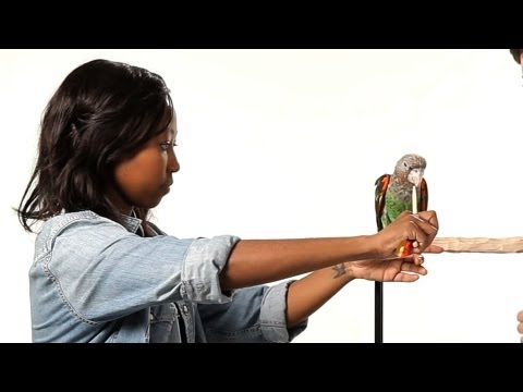 How to Train Your Parrot to Step Up | Parrot Training