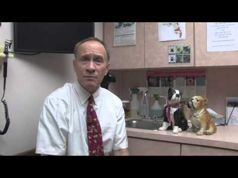 How to Raise Low Platelet Counts in Dogs