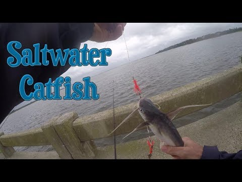 Catching SALTWATER CATFISH, Sharks, and More!