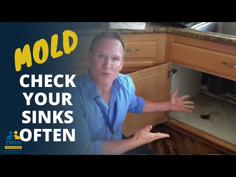 Mold - Why You Should Look Under Sinks Often