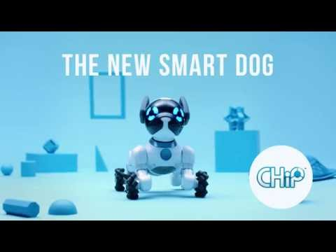 CHiP. The new smart dog.
