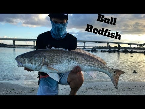 Bull Redfish Fishing at Sebastian Inlet!!!!!!!!!